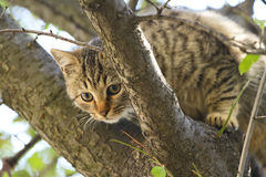 Gray cat sits on a tree among the branches and leaves royalty free stock photo