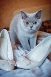 The cat with the bride shoes stock photo