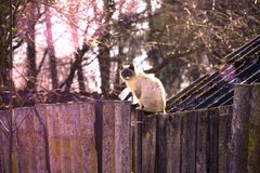 A gray cat sits on a wooden fence in the street Royalty Free Stock Photography