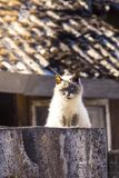 A gray cat sits on a wooden fence in the street Royalty Free Stock Photo