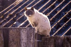 A gray cat sits on a wooden fence in the street Royalty Free Stock Photos