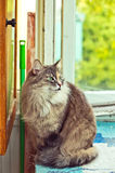 Gray Cat sitting on  a balcony with sunlight Royalty Free Stock Photo