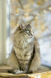 Gray cat sitting on a balcony with sunlight Stock Photos