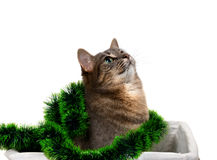 Gray cat sitting in basket with Christmas tinsel and looking up Stock Photos