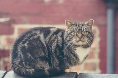 Gray cat sitting on brick wall. Stock Photography