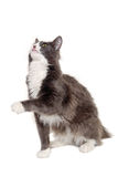 Gray cat sitting on a clean white background Stock Images