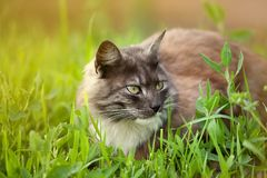 Gray cat sitting in fresh grass Stock Images