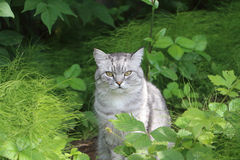 The gray cat sitting in a grass Stock Photos