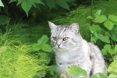 The gray cat sitting in a grass Stock Photography