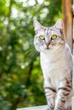 Gray cat sitting on the green garden Stock Photography
