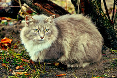 Gray cat sitting near bushes Royalty Free Stock Photography