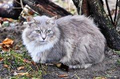 Gray cat sitting near bushes Stock Photos