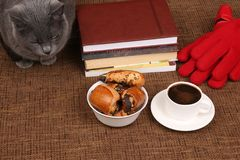 Gray cat sitting near a white Cup of black coffee and rolls with. The gray cat sitting near a white Cup of black coffee and rolls with poppy seeds Stock Photos