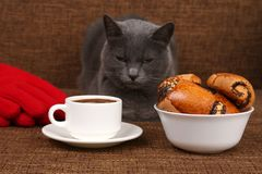 Gray cat sitting near a white Cup of black coffee and rolls with. The gray cat sitting near a white Cup of black coffee and rolls with poppy seeds Royalty Free Stock Images