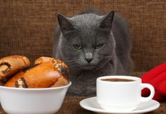 Gray cat sitting near a white Cup of black coffee and rolls with. The gray cat sitting near a white Cup of black coffee and rolls with poppy seeds Stock Photography