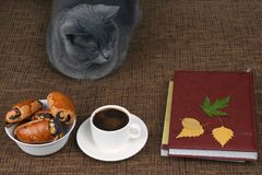Gray cat sitting near a white Cup of black coffee and rolls with. The gray cat sitting near a white Cup of black coffee and rolls with poppy seeds Stock Images