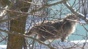 Gray Cat Sitting On The Outside metrajes