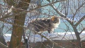 Gray Cat Sitting On The Outside almacen de metraje de vídeo