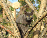 Gray cat sitting on tree Royalty Free Stock Image