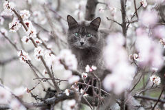 Gray cat sitting in a tree looking at the camera, outdoor Royalty Free Stock Photos
