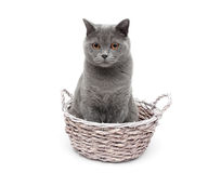Gray cat sitting in a wicker basket on a white background Stock Photo