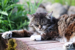 Gray cat sleeping. In wooden chair in nature Stock Photo