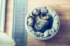 Gray cat sleeping in basket  near a window on parquet floor, top view Royalty Free Stock Photos