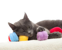Gray cat sleeping Royalty Free Stock Images