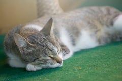 Gray cat sleeping on a green carpet. Gray cat sleeping on a green carpet stock photo