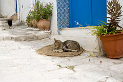 The gray cat sleeping on mats in front of the house Royalty Free Stock Photography