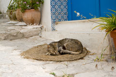 The gray cat sleeping on mats in front of the house Stock Photography