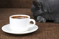 Gray cat sleeping near a white Cup of black coffee. The gray cat sleeping near a white Cup of black coffee Royalty Free Stock Photography