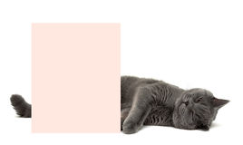 Gray cat sleeping next to the banner Stock Images