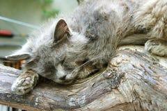 Gray cat sleeping on a tree royalty free stock photos