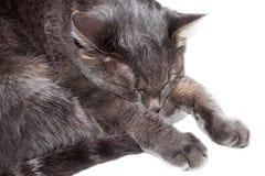 Gray cat sleeps Stock Photo