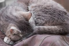 Gray cat sleeps outside royalty free stock images