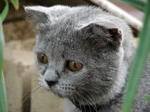 сat. Gray cat on the stone wall Royalty Free Stock Images