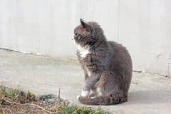 Gray cat on the street.  stock photo