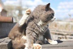 Gray cat on the street.  stock photos