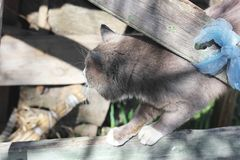 Gray cat on the street.  royalty free stock images