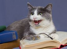 Gray cat-teacher pretends disciples, taking off glasses. stock photo