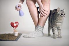 Gray cat-third of girls' feet Royalty Free Stock Image