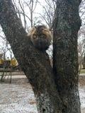 Gray cat on the tree Stock Photography