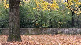 Gray Cat Under the Linden Tree in Autumn stock footage