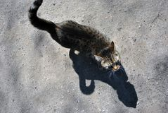 Gray cat walking on gray asphalt road texture. Top view stock image
