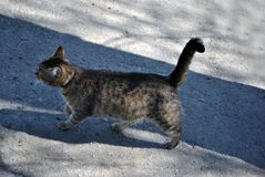 Gray cat walking on gray asphalt road texture with shadow line, side. View stock photos
