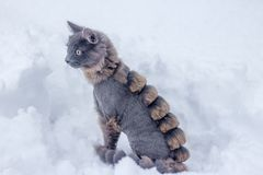 Gray cat walking in the snow. Pet walks on white snow royalty free stock image