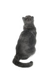 Gray Cat Serie Royalty Free Stock Photos