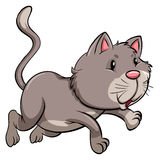 A gray cat Stock Images
