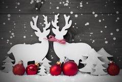 Gray Christmas Decoration, coppia della renna, fiocchi di neve, palla rossa Immagine Stock